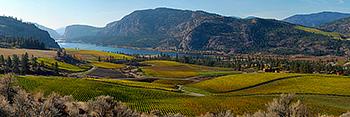 Go to Print Shop>Panoramas>Vineyards