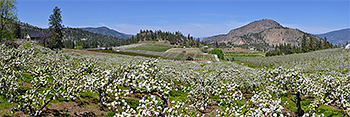 Go to Print Shop> Panoramas>Blossoms-Flowers