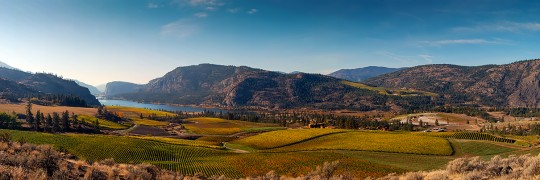 Autumn Over Blue Mountain Vineyard 9547